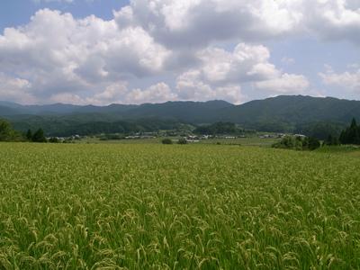 Iwamura18.jpg